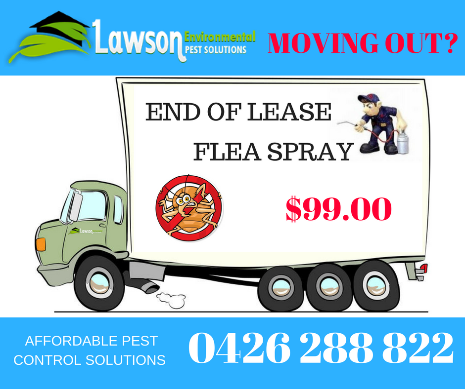 Vacating end of lease flea spray